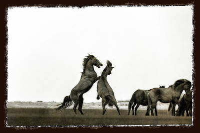 Wild Horse Series - The Fight Poster