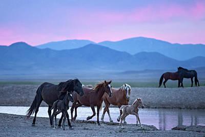 Wild Horse Sunrise Poster