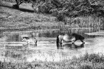 Wild Horses Bw2 Poster