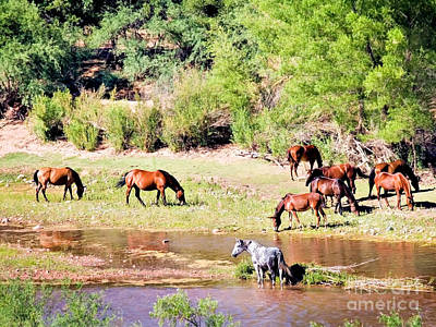 Wild Horses Grazing At Waterhole  Poster