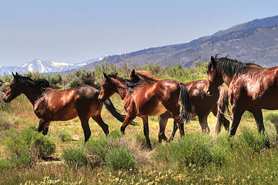 Wild Horses Of Nevada Poster by Donna Kennedy