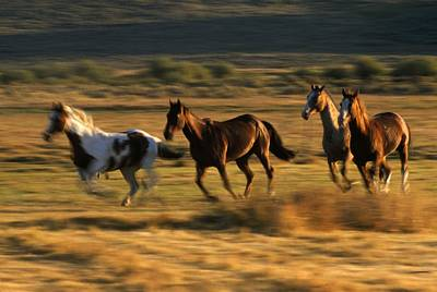 Wild Horses Running Together Poster