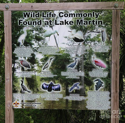 Wild Life Commonly Found Lake Martin Sign Poster