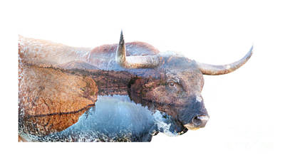 Wild Longhorn Bull And Lake Double Exposure Poster