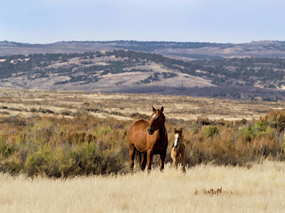 Poster featuring the digital art Wild Mare With Young Foal In Sand Wash Basin by Nadja Rider