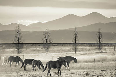 Wild Mountain Horses - Black And White Poster by Gregory Ballos