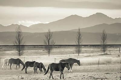 Wild Mountain Horses - Black And White Poster