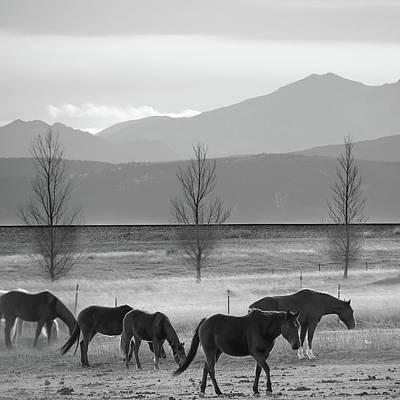 Wild Mountain Horses - Rocky Mountains Colorado - Black And White Square Poster