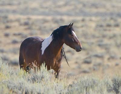 Wild Mustang 1 Poster