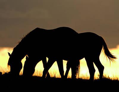 Wild Mustang 13 Poster