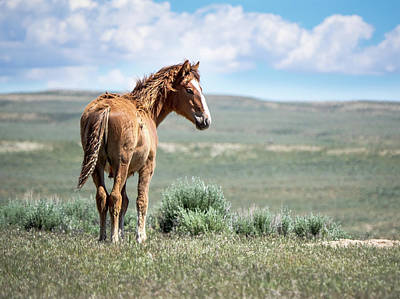 Poster featuring the photograph Wild Mustang Colt Of Sand Wash Basin by Nadja Rider
