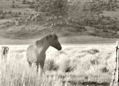 Wild Mustang Of Adobe Valley Eastern Sierra Poster