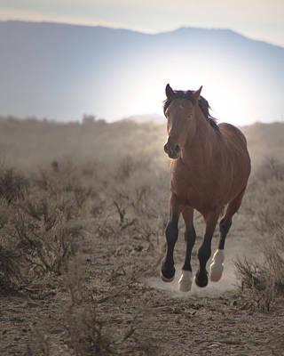 Wild Mustang Stallion Running Poster