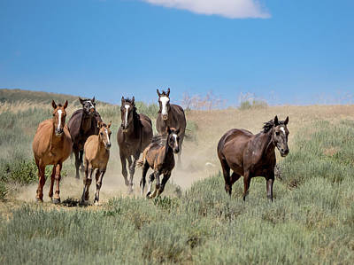 wild mustangs on the run to the water hole in Sand Wash Basin Poster