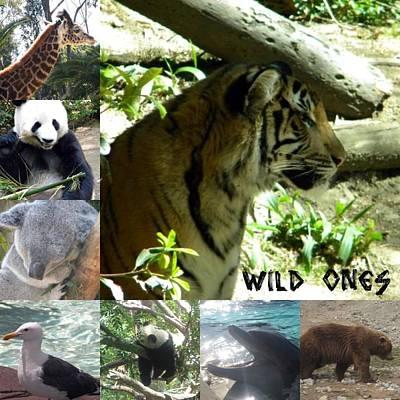 Wild Ones Poster