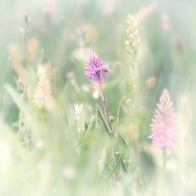 Wild Orchid Impressions Poster by Sylvia Slavin