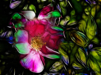 Wild Rose - Colors Poster by Stuart Turnbull