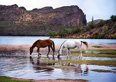 Wild Salt River Horses At Saguaro Lake Arizona Poster by Dave Dilli