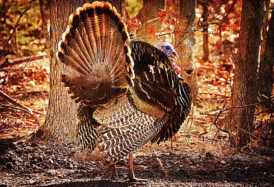 Poster featuring the photograph Wild Turkey by Angel Cher