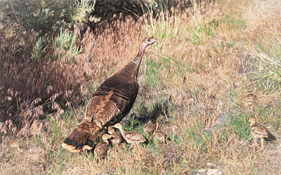 Wild Turkey Hen With Chicks Poster by Donna Kennedy