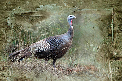 Poster featuring the photograph Wild Turkey by Jan Piller