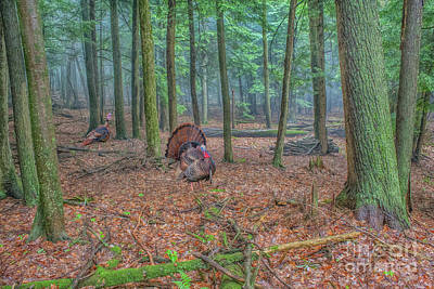 Wild Turkeys In Forest Poster