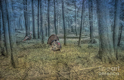 Wild Turkeys In Forest Version Two Poster