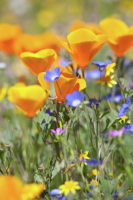 Poster featuring the photograph Wildflower Detail by Cliff Wassmann