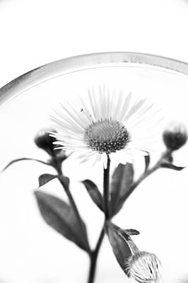 Wildflower In A Wine Glass Black And White Poster
