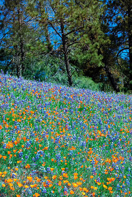 Poster featuring the photograph Wildflower Meadow - Figueroa Mountains California by Ram Vasudev