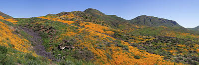 Poster featuring the photograph Wildflower Panoramic by Cliff Wassmann