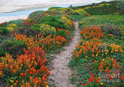 Wildflower Path At Ribera Beach Poster