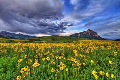 Wildflower Storm Poster