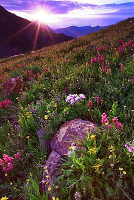Wildflower Sunburst On Stony Pass Poster