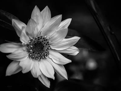 Wildflower Sunflower Poster