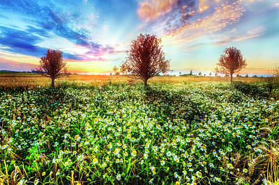 Wildflower Sunset Poster by Debra and Dave Vanderlaan