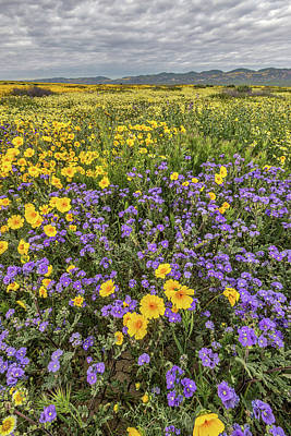 Poster featuring the photograph Wildflower Super Bloom by Peter Tellone
