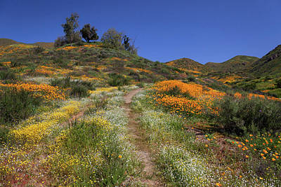 Poster featuring the photograph Wildflower Superbloom by Cliff Wassmann