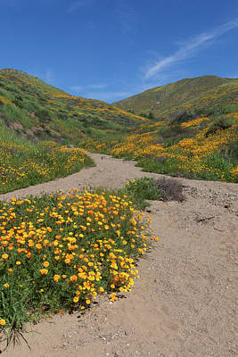 Poster featuring the photograph Wildflowers Along Walker Canyone by Cliff Wassmann