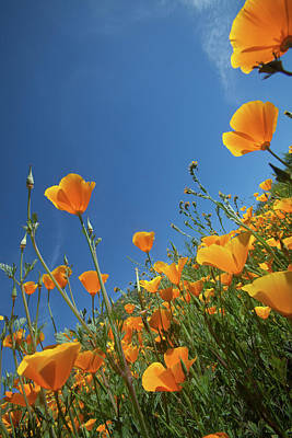 Poster featuring the photograph Wildflowers And Blue Sky by Cliff Wassmann
