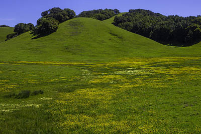 Wildflowers And Green Hills Poster by Garry Gay