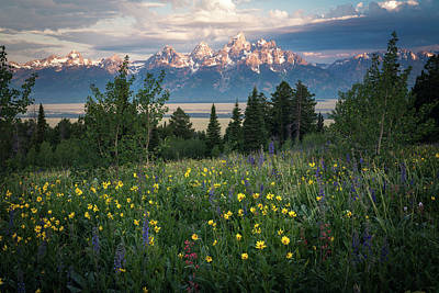 Wildflowers At Grand Teton National Park Poster