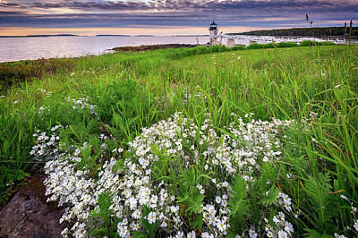 Wildflowers At Marshall Point Poster by Rick Berk