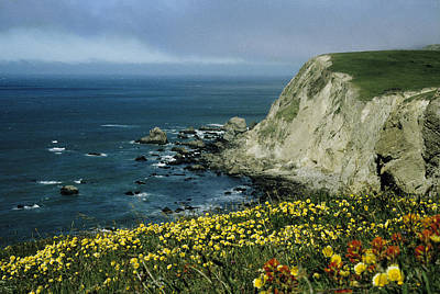 Wildflowers At Pt. Reyes Poster