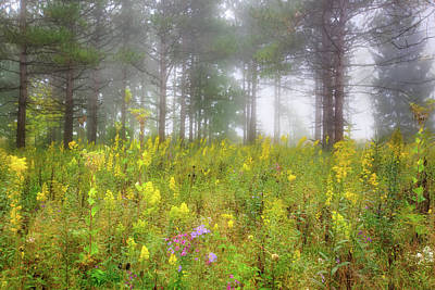 Wildflowers At Retzer Nature Center  Poster by Jennifer Rondinelli Reilly