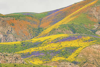 Poster featuring the photograph Wildflowers At The Summit by Marc Crumpler
