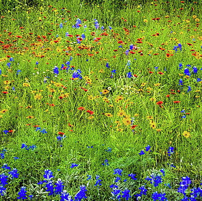 Poster featuring the photograph Wildflowers In Bloom by D Davila