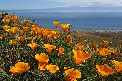 Wildflowers On San Juan Island Poster by Dan Sproul