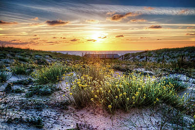 Wildflowers On The Sand Dunes Poster