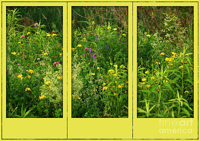 Poster featuring the photograph Wildflowers Through A Window by Smilin Eyes  Treasures